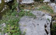Αρχαίο Γεφυράκι Της Γκούρας