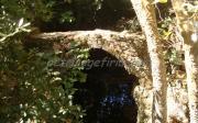 Πρώτο Γεφύρι Στον Καταρράκτη Της Φόνισσας
